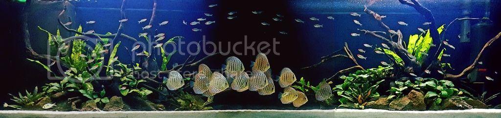 Aquarium sur mesure 24173110