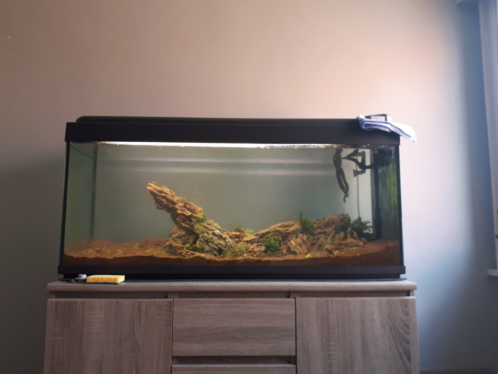 Population pour un aquarium de 270 litres  20200510