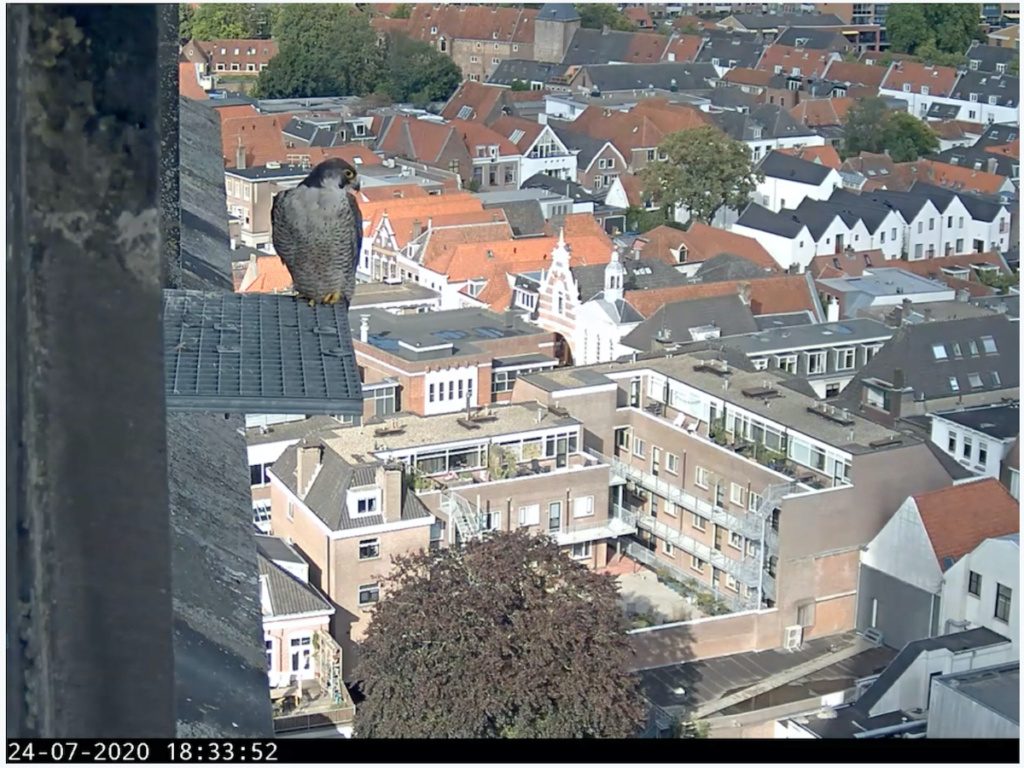 Amersfoort/OLV toren. Joris en V (1PF) - Pagina 7 Afoort10