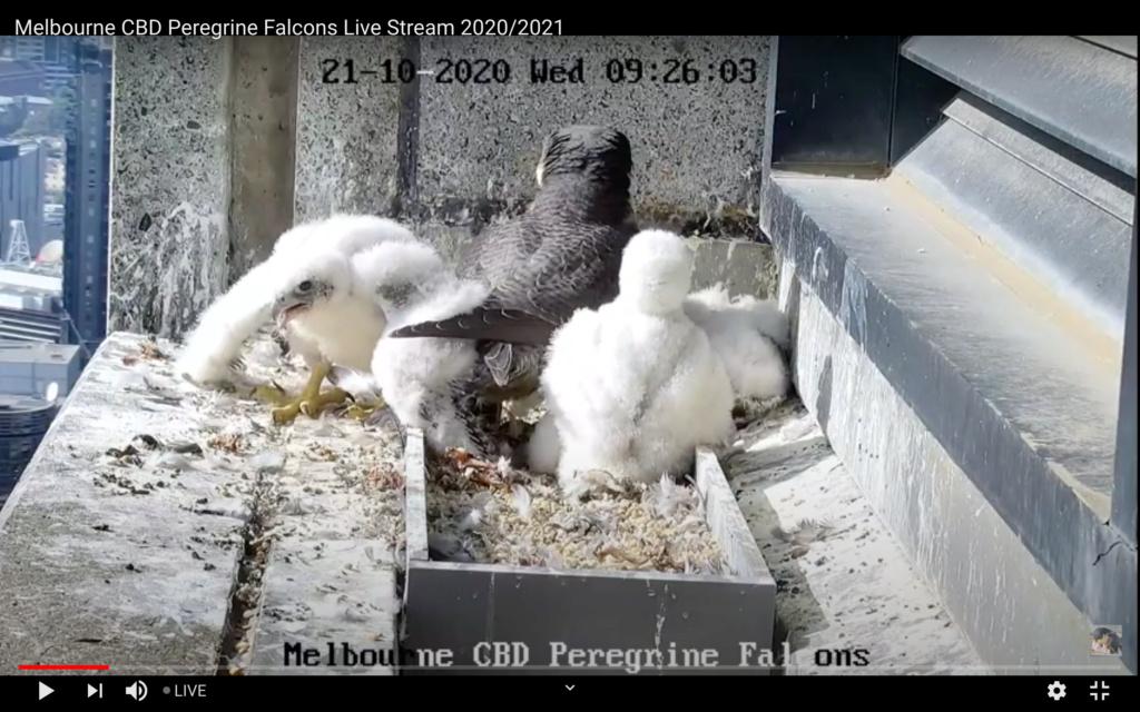 Melbourne. 367 Collins Street - Pagina 3 Melbou10
