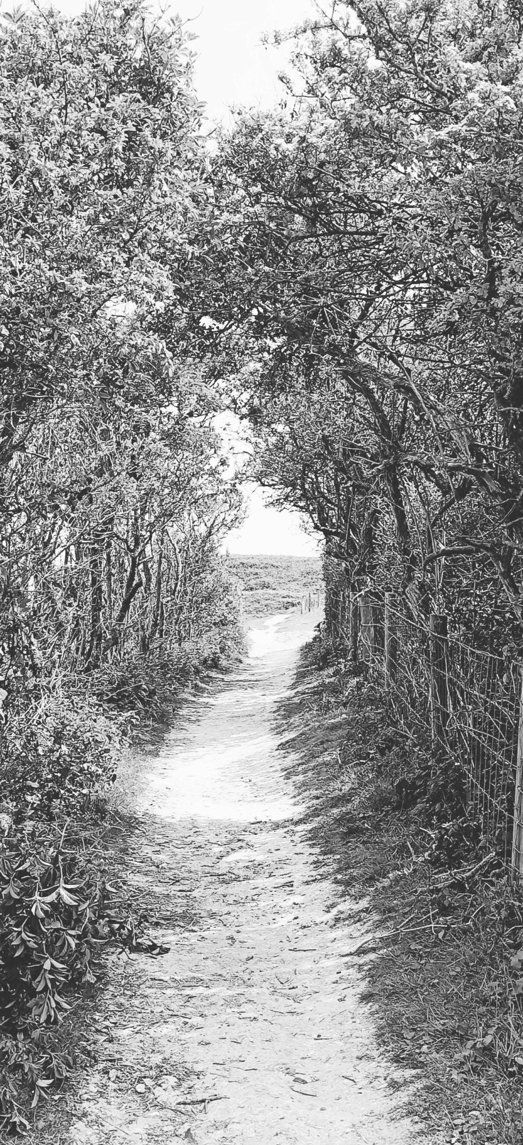 sentier du Cap gris nez Img_2015