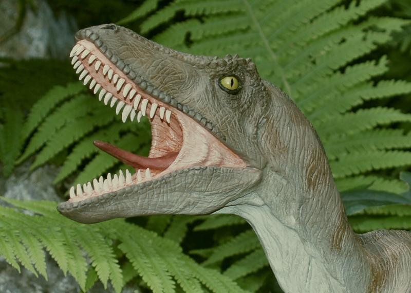 Velociraptor Velo0710