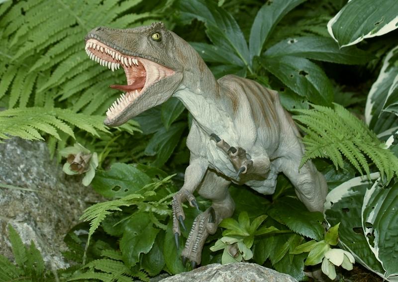 Velociraptor Velo0810