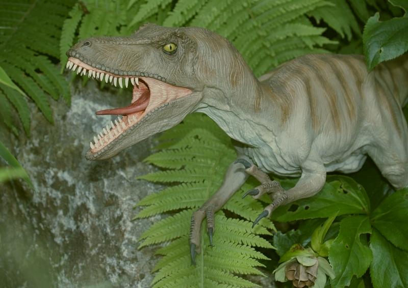 Velociraptor Velo0910