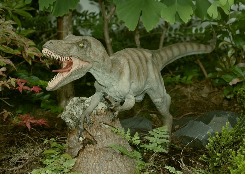 Velociraptor Velo1010