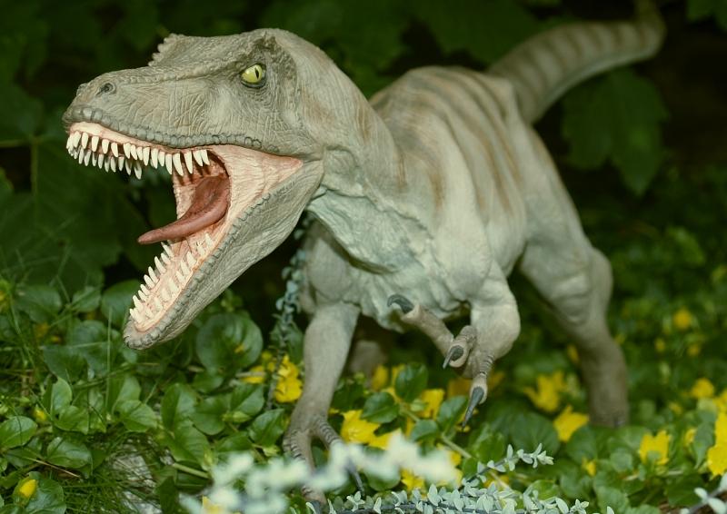 Velociraptor Velo1310