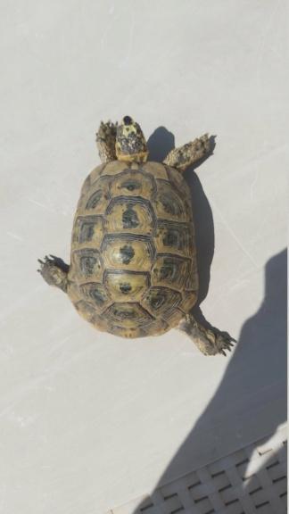 Identification de ma tortue Rocky 20210411