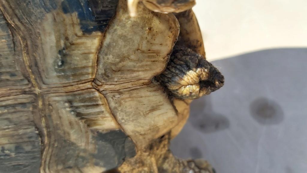 Identification de ma tortue Tank - 1 20210516