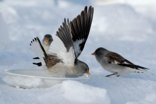 Les 100 plus belles photos animalières de l'année - Page 2 Soif-410