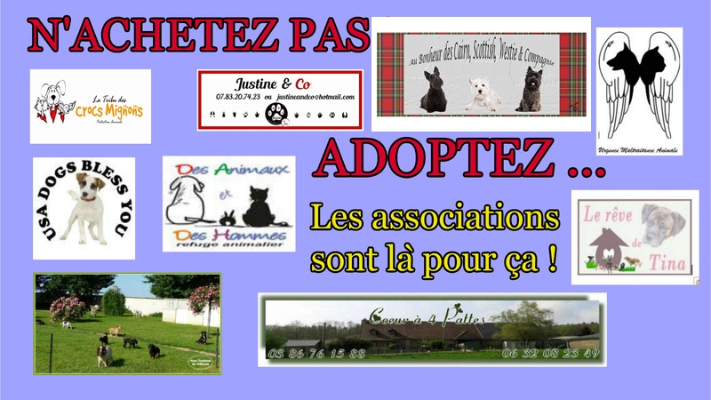 adoption Nouvea11