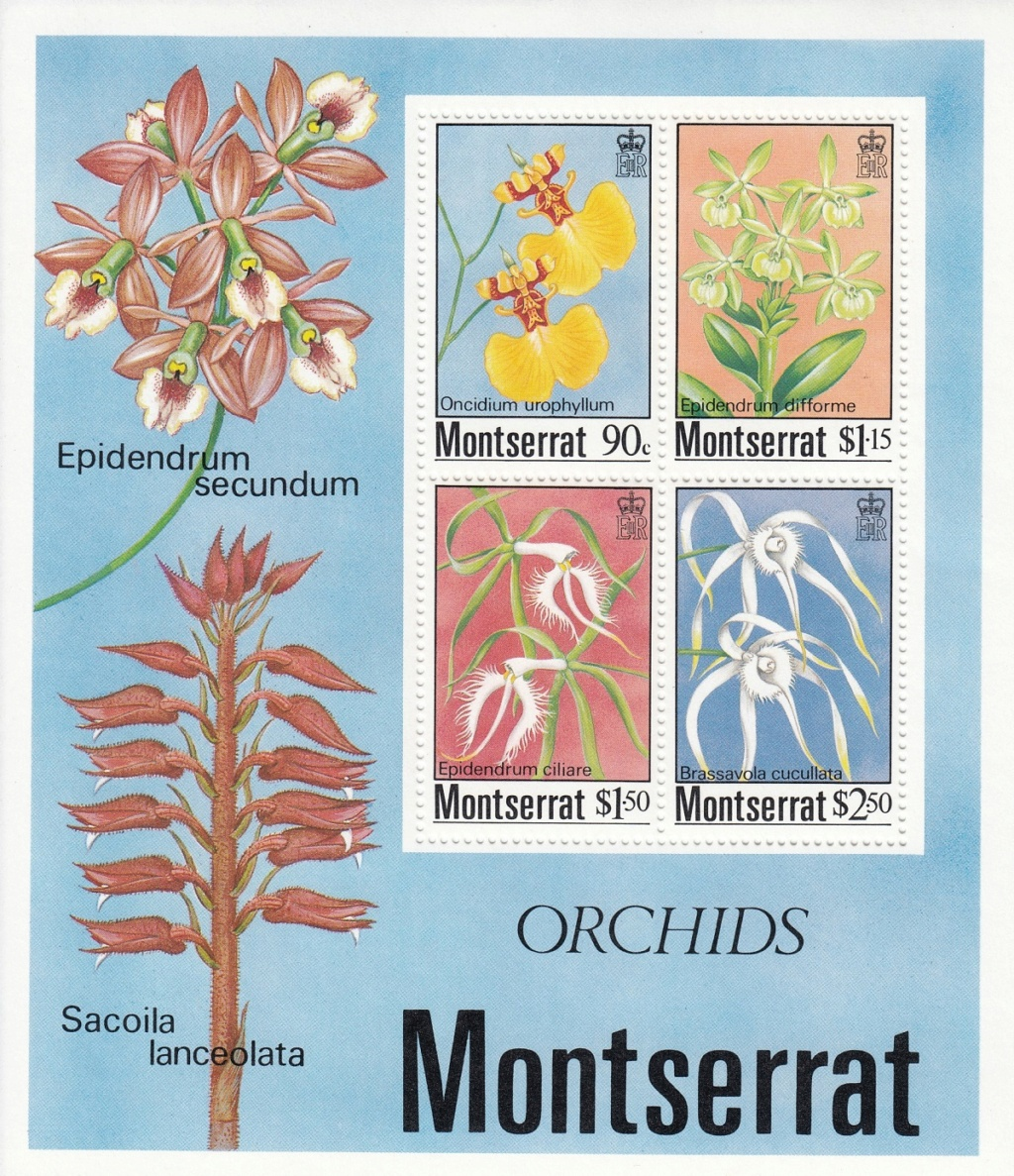 Orchideen O1010