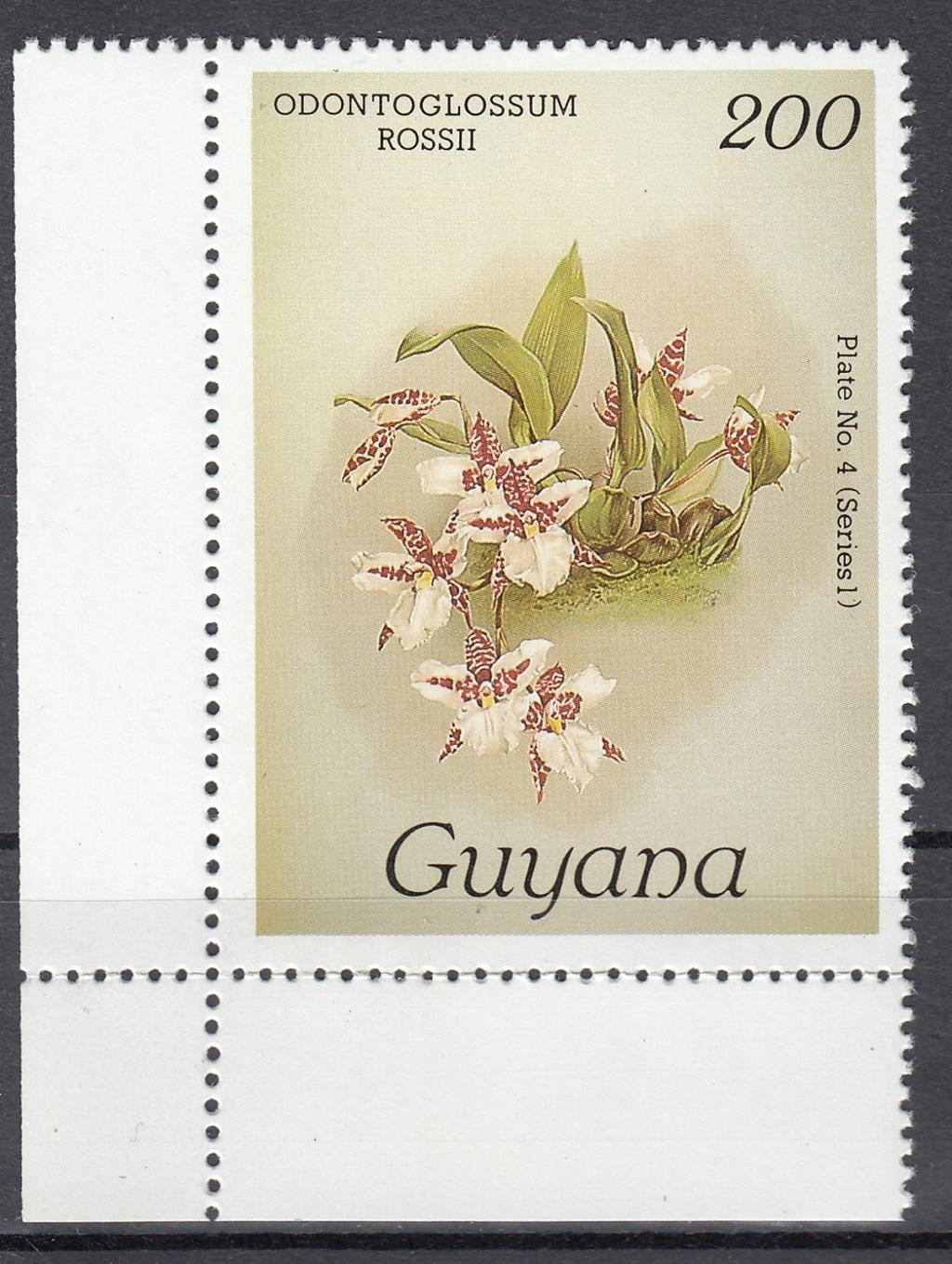 Orchideen O310