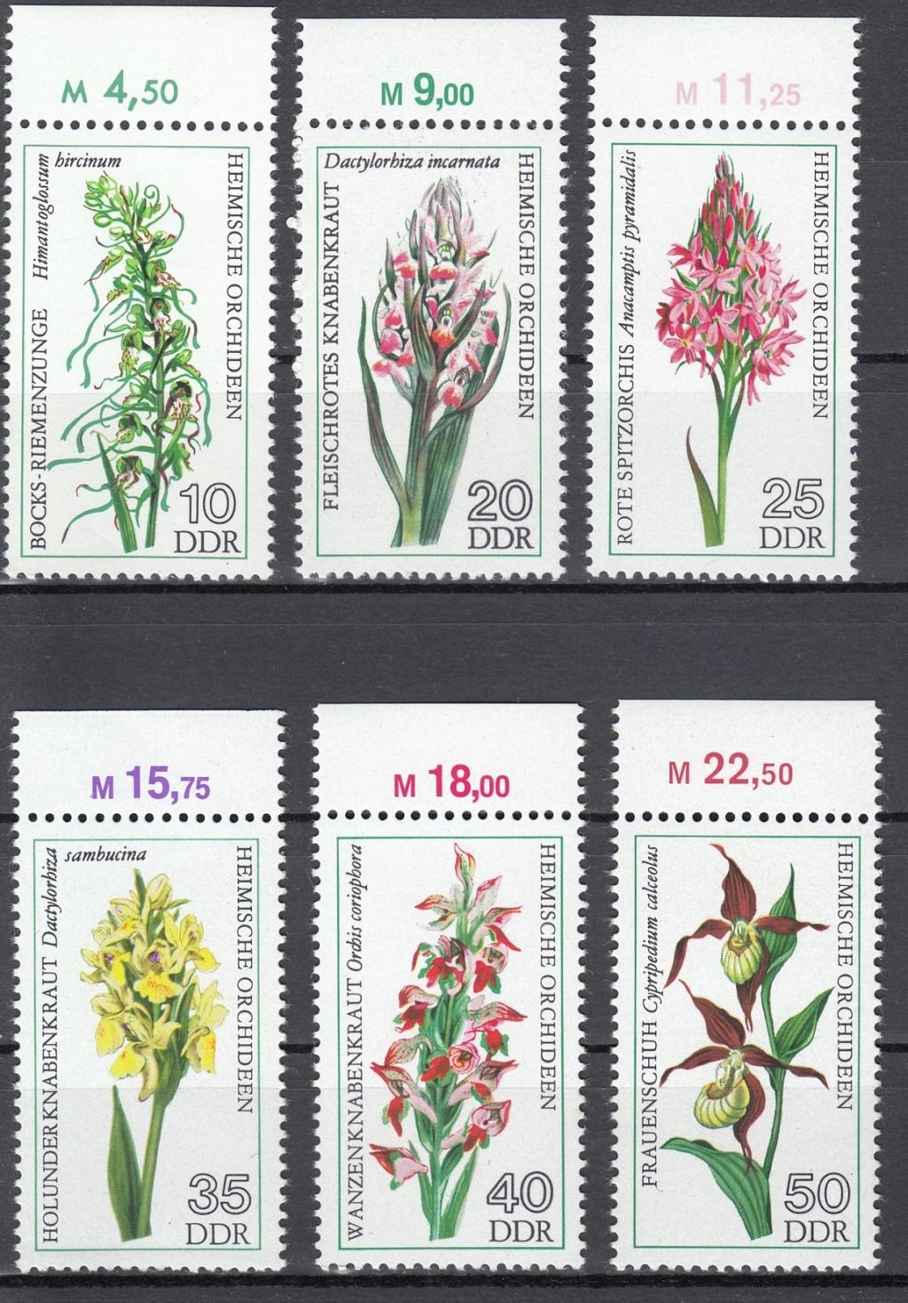 Orchideen O810
