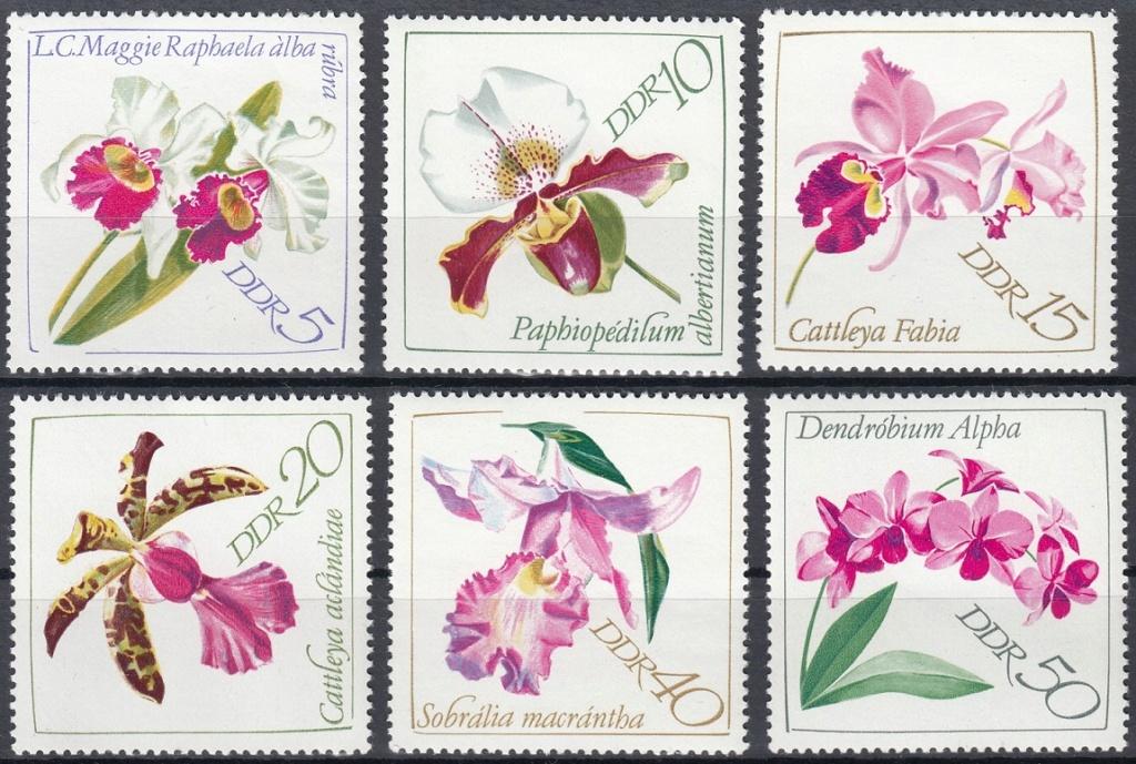 Orchideen O910