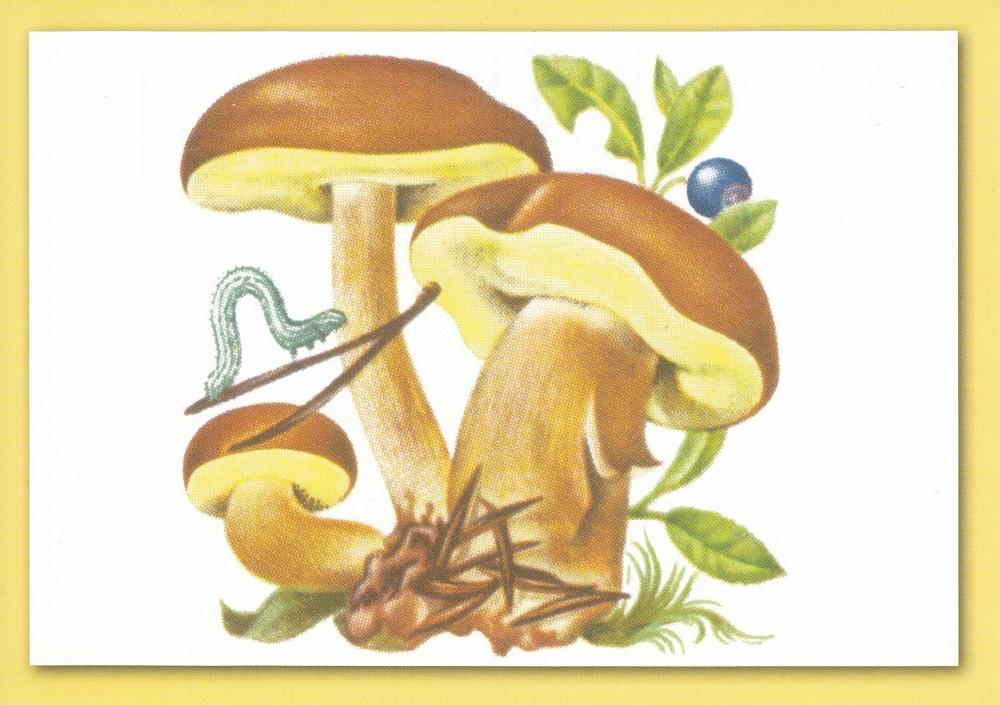 Pilze - Seite 2 Pilz210
