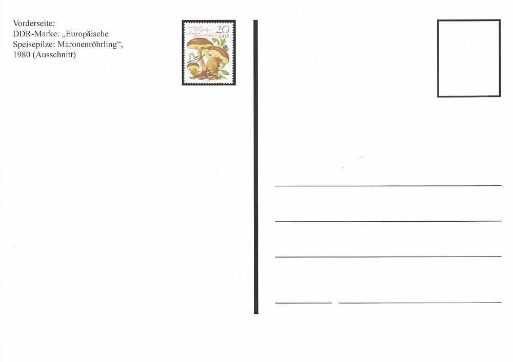 Pilze - Seite 2 Pilz310