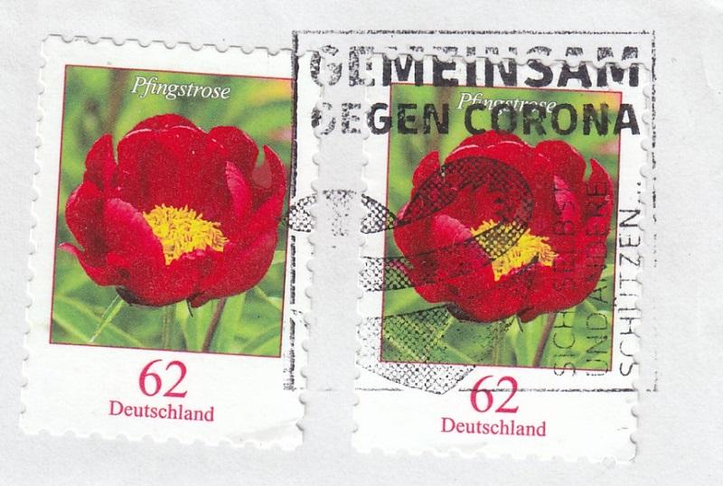 Rosen Rose1310