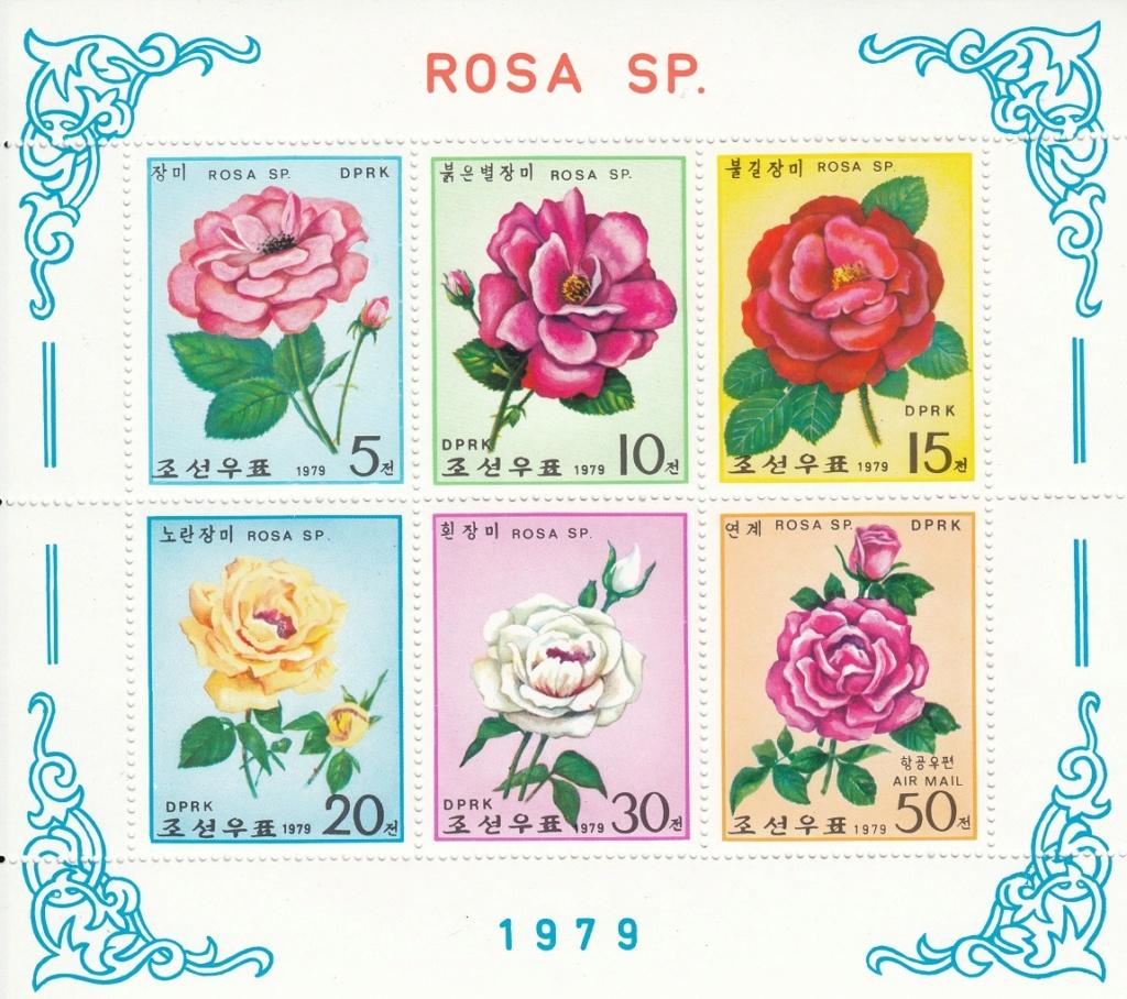 Rosen Rose510
