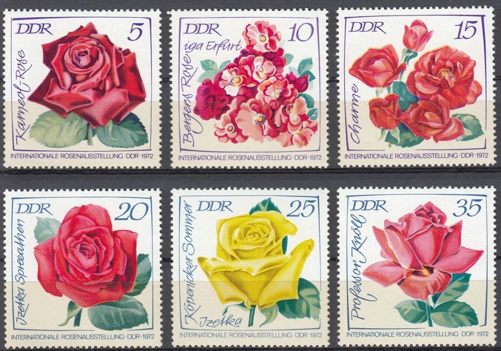 Rosen Rose710