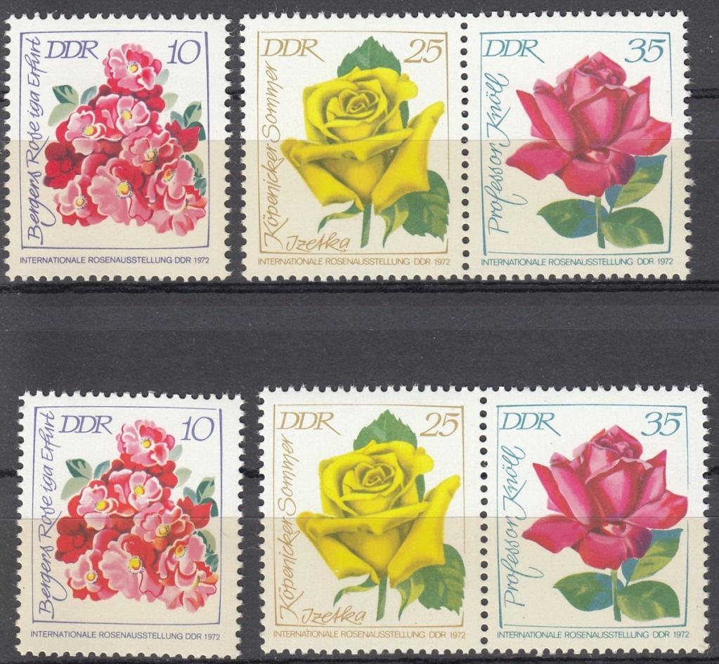 Rosen Rose810