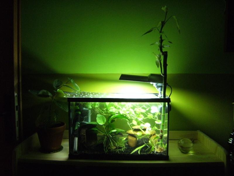 "Et ""Vos aquariums"", c'est ici ? =P Dscf0010"