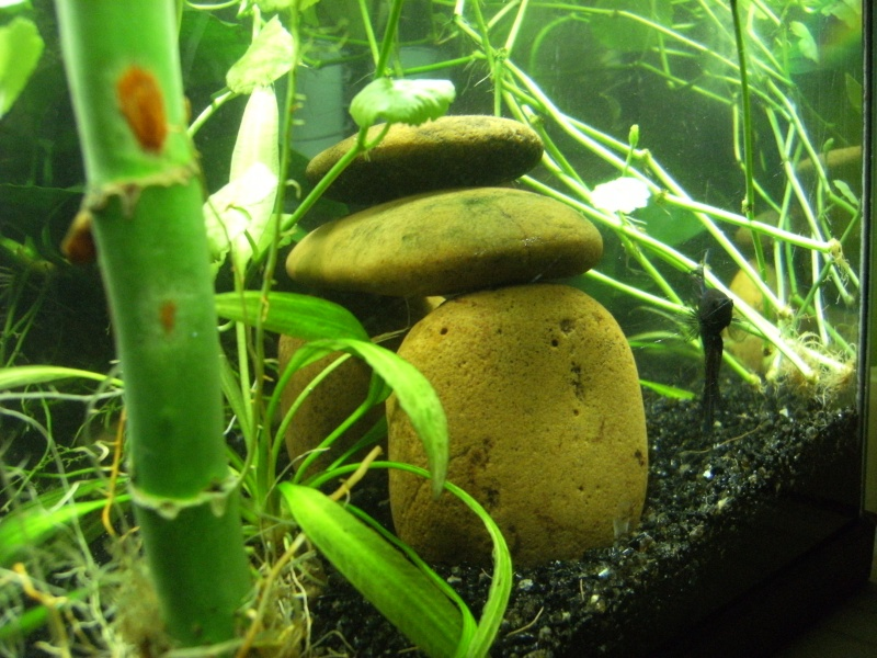 "Et ""Vos aquariums"", c'est ici ? =P Dscf0015"