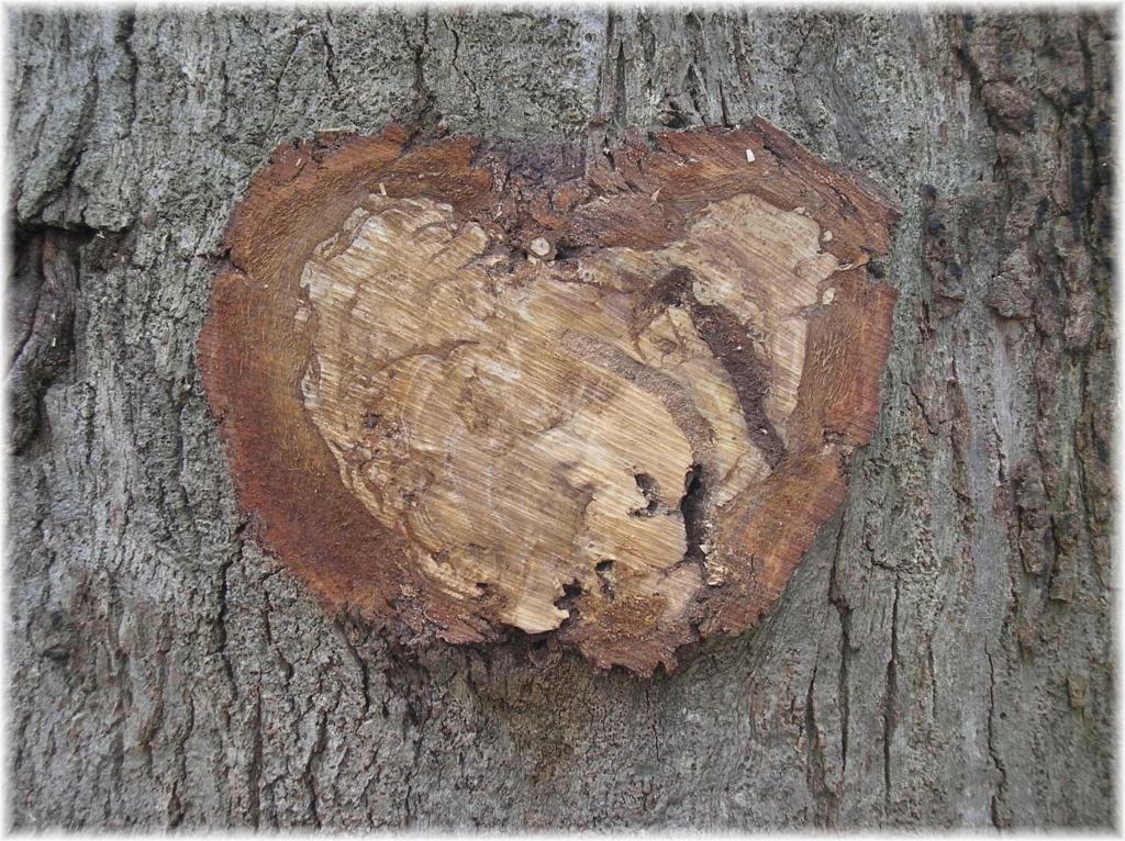 C - L'arbre au grand cœur  P2150910