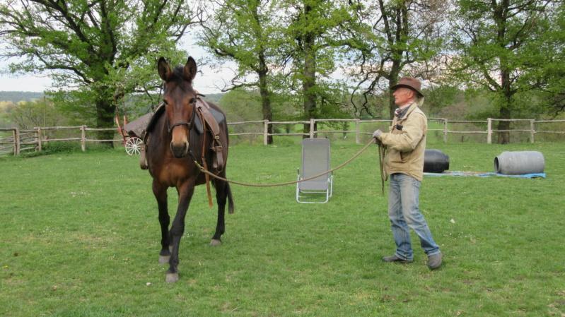 FALBALA - ONC mule née en 2015 - adoptée en juillet 2016 par Thierry - Page 3 Img_9110