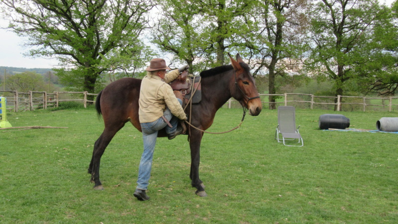FALBALA - ONC mule née en 2015 - adoptée en juillet 2016 par Thierry - Page 3 Img_9111