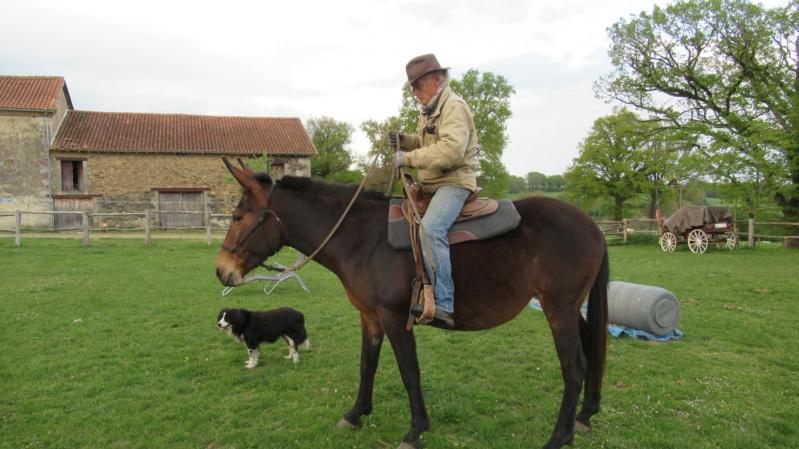 FALBALA - ONC mule née en 2015 - adoptée en juillet 2016 par Thierry - Page 3 Img_9114