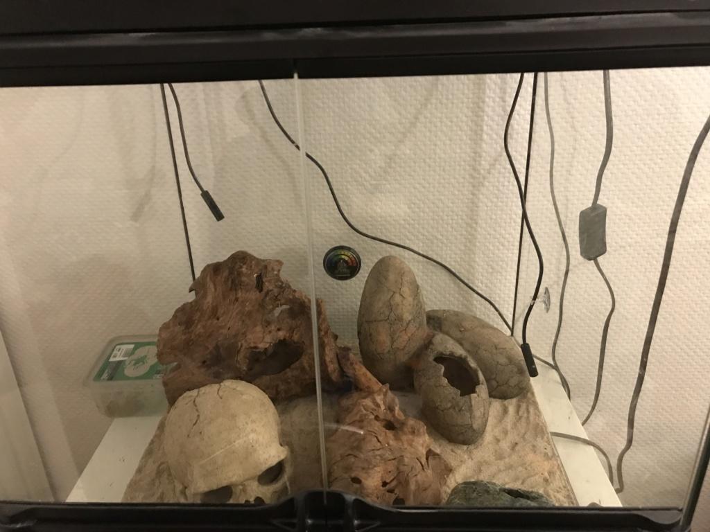 problème de chauffage geckos  Photo_12