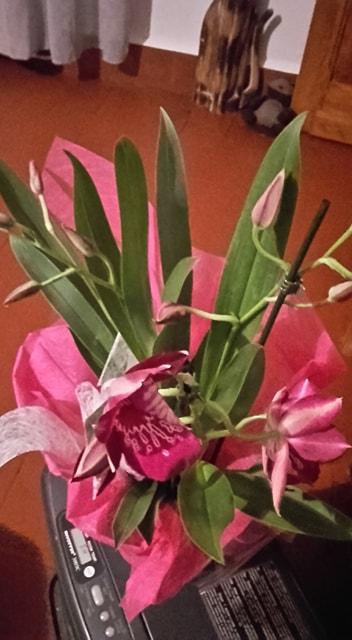 Orchidée     miltoniopsis 57070910