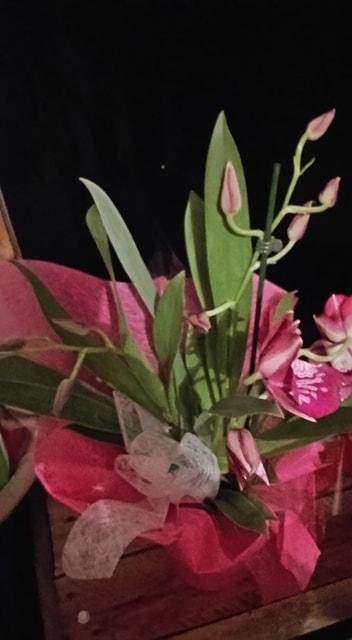 Orchidée     miltoniopsis 57284510