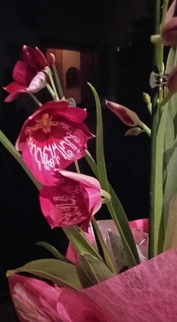 Orchidée     miltoniopsis 57449410