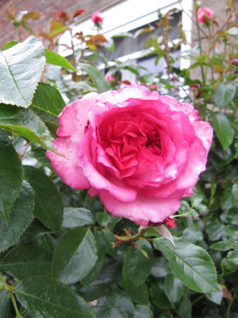 Fleurs du jardin en ce moment  Les_fl10