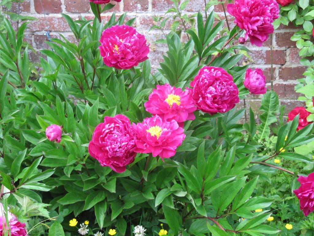 Fleurs du jardin en ce moment  Les_fl15