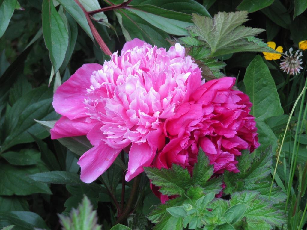 Fleurs du jardin en ce moment  Les_fl16