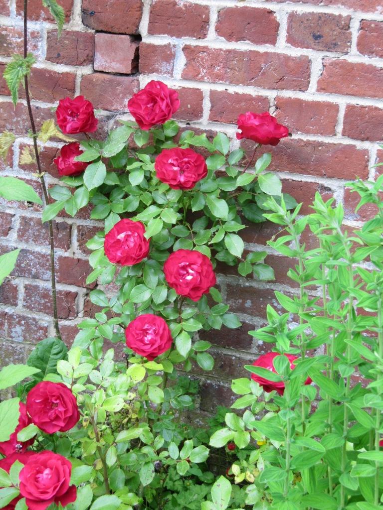 Fleurs du jardin en ce moment  Les_fl17