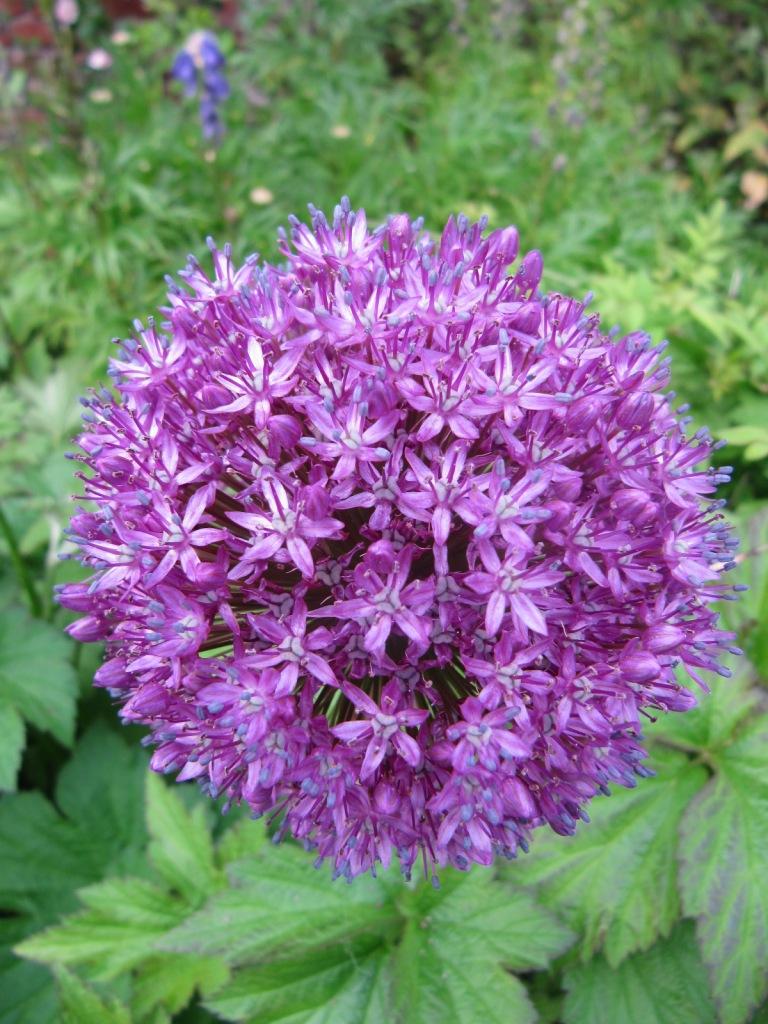 Fleurs du jardin en ce moment  Les_fl18