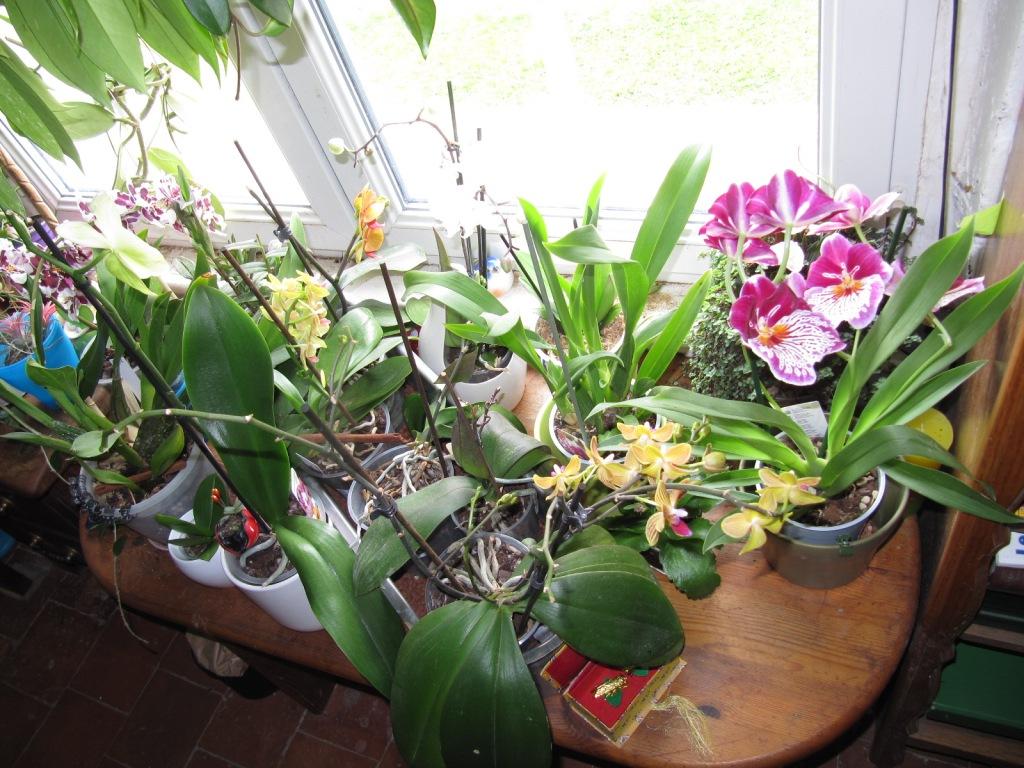 Floraison de mes Orchidées  Orchid10