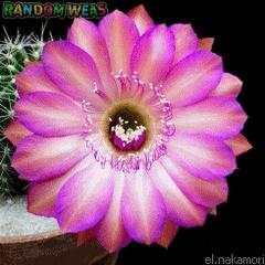 les fleurs - Page 3 220210