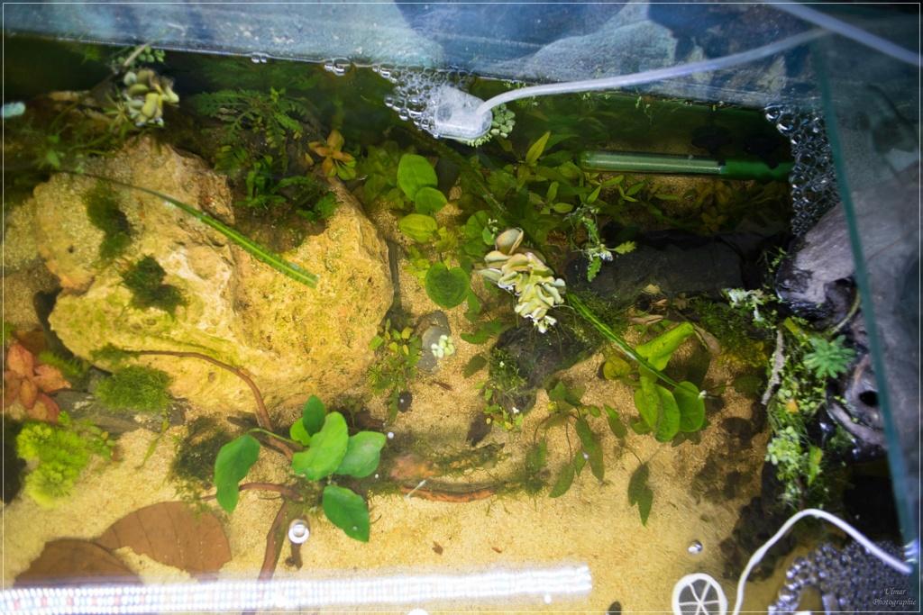 [PROJET] ANP/LowTech Corydoras dehors[Re-post] 2019_016