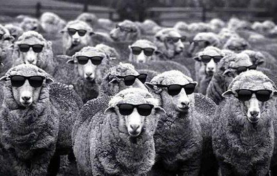 Rions avec le changement climatique - Page 7 Mouton10