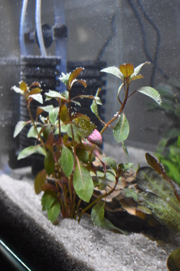 Identification des plantes Dsc_2721