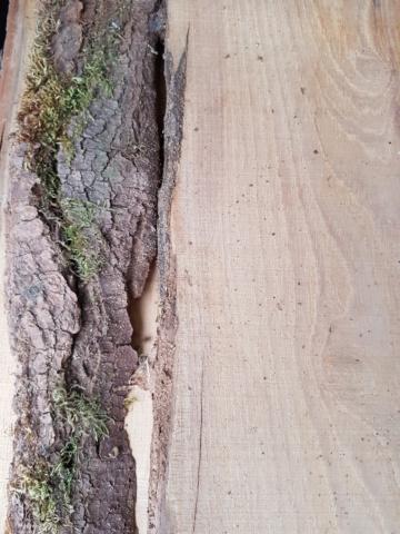 Identification bois 20200211