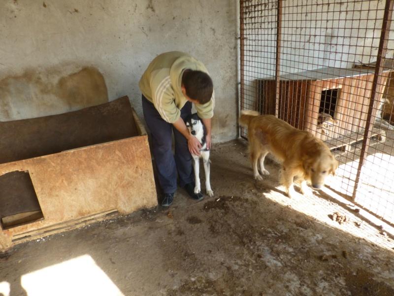 HAAS M-X husky, taille moyenne, 20 kg, né env. 2014 (BACKA) Pris en charge Un coeur pour eux Haas910