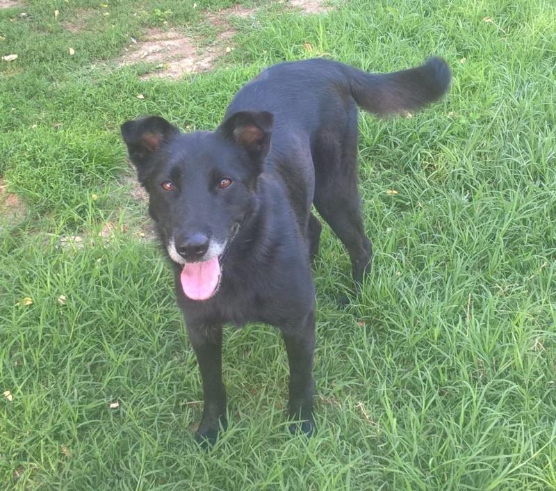 JUSTIN M-X labrador noir, taille moyenne, env. 25 kg, né 2013 Ex-Backa(BELLA)PRET/ BESOIN DE SOINS - Page 3 Justin12
