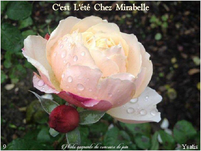 Forum Chez Mirabelle