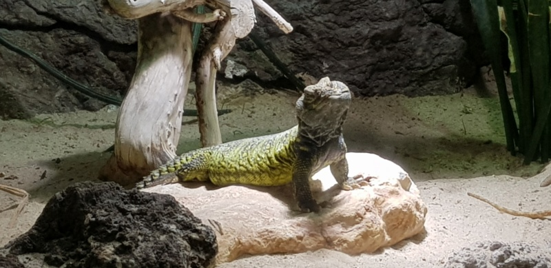 Le Zoo de Rome 20190614