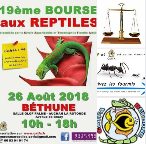 19 ème bourse aux reptiles / 26.08 /Bethune Captur12